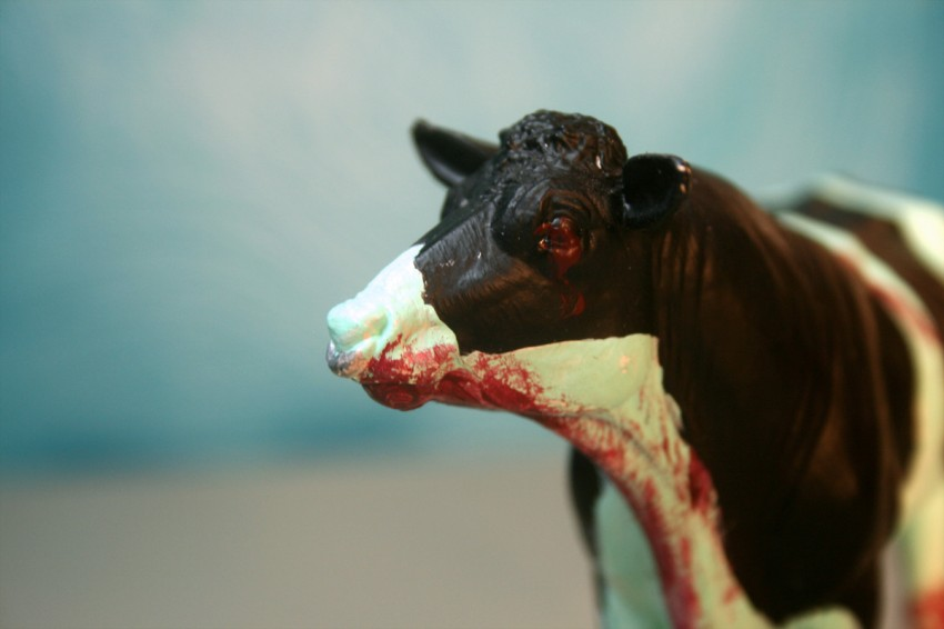 Zombie Cow - Close-Up