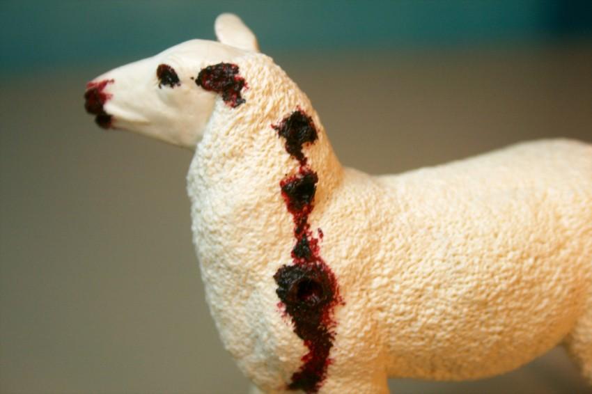Zombie Sheep - Close-Up